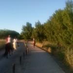 caballos en gallego (Hay que salir a cabalgar)