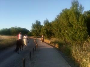 caballos en gallego